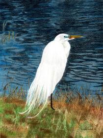 Snowy Egret by Linda Ginn