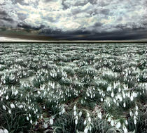 Spring Field by florin