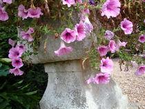 Blumen in einem englischen Garten von framboise