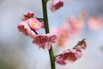 Frühling von meleah