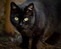Black cat von Tobiasz Stefaniak