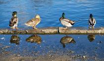 duck reflex by emanuele molinari