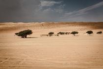 camel compound von Eva Stadler