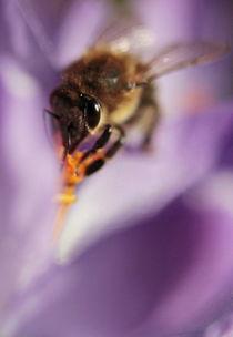 Biene-im-krokus-dot-1