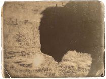 Vintage Bison by Deniece Platt
