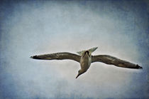 Flying  by AD DESIGN Photo + PhotoArt