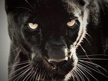 Leopard Stare von Deniece Platt