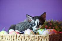 Dsc8144-dot-drx-kitten8-03-14