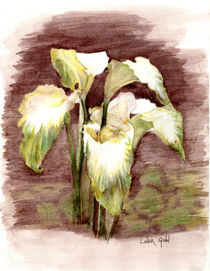 Green-goddess-calla-lilies-drawing