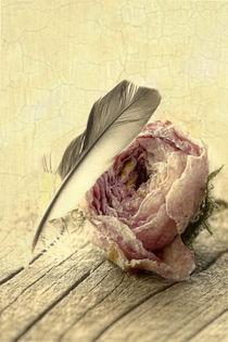 Rose-2161-bleich