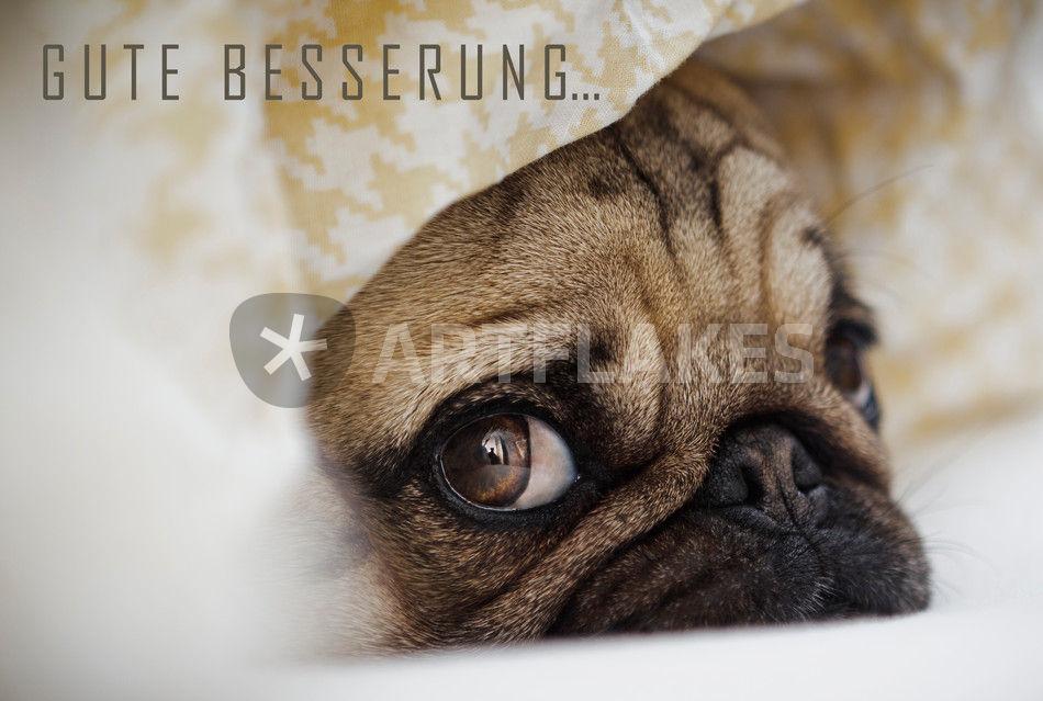 gru karte gute besserung fotografie als poster und. Black Bedroom Furniture Sets. Home Design Ideas