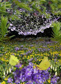 Fruehlingsblumenwiese