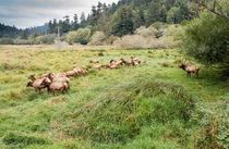Redwoods-94a