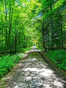 Mystischer Waldweg by M.  Bleichner