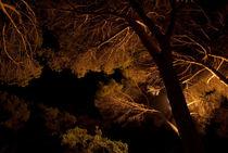 forest#1 von mthz
