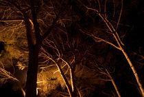 Forest#2 von mthz