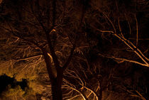 forest#4 von mthz