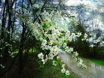 Springtime by florin