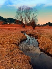 'Bach, Bäume, Spiegelungen | Landschaftsfotografie' by Patrick Jobst