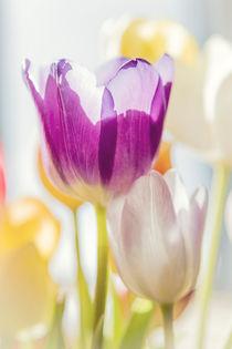 Tulips von Beate Zoellner