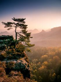 Morgenlicht von Andreas Wonisch