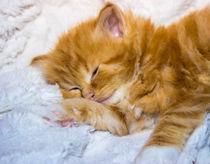 Kleiner Tiger ganz müde von Dennis Stracke