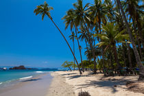 palm tree hangs over a tropical beach von Craig Lapsley
