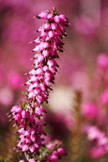 Pink-pinker-pinkest-03