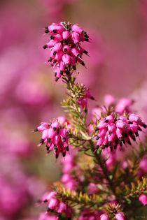 Pink-pinker-pinkest-04