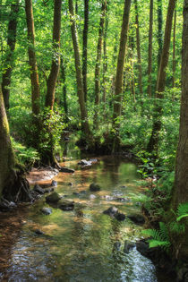 Summer Stream by David Tinsley