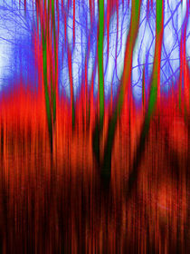 Tinted Woods by florin