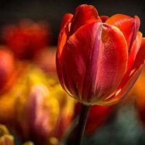 Various-flowers-memphis-botanic-garden-053-square-texture-nw-srgb