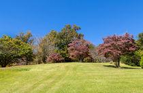 Purple Leaves by John Bailey