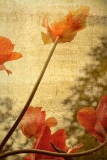 Orange Tulips von Michelle Calkins