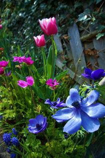 Gartenblumen im Frühling by framboise
