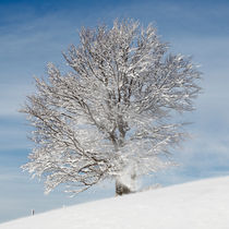 Winterlicher Baum by Rainer Rombach