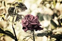 zarte Königin der Blumen by magique-digital