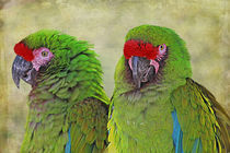 Amazon Parrot Pair by Carol Vega