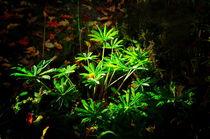 Mystical plant by Roman Popov