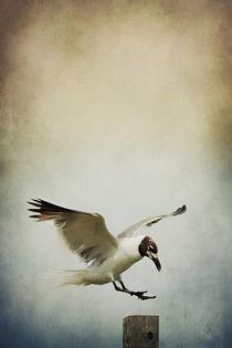 A Seagull's Landing von Trish Mistric