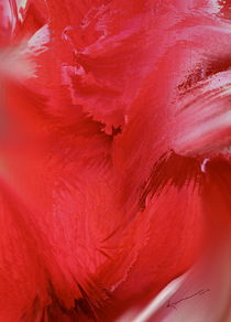 Red Petals by Kume Bryant