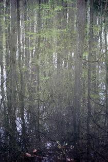 Spiegelbild von Jens Berger
