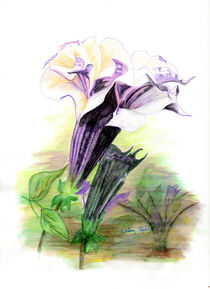 Double Lavender Angel Trumpet by Linda Ginn