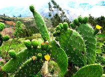 blühender Kaktus by reisemonster