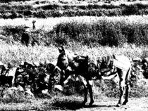 Die Frau und der Esel von reisemonster