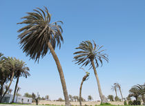 Palmen im Wind by reisemonster