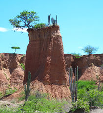 Wüstenbaum von reisemonster
