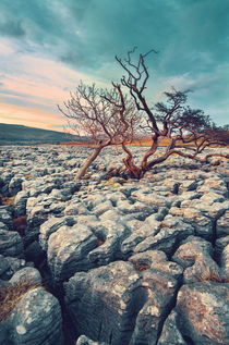 Limestone Pavement by David Pinzer