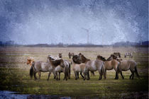 Wild Horses by freedom-of-art