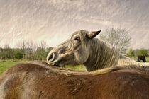 Pferde-004-z1